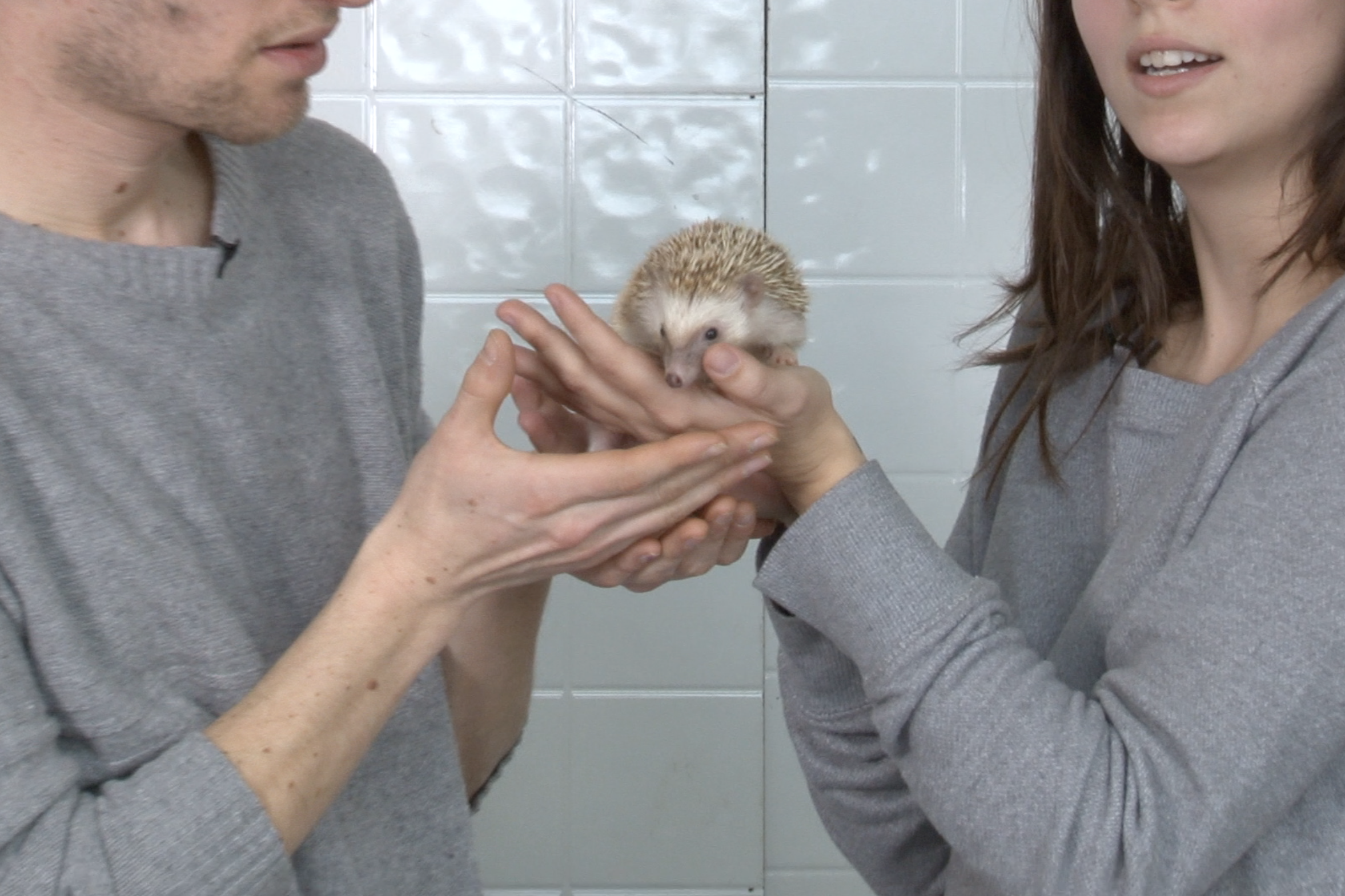 hedgehog02.png