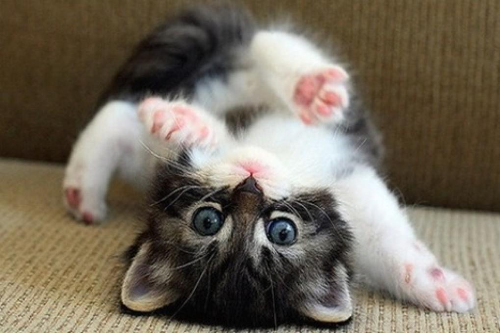 cute-cat-picture-wallpaper.jpg
