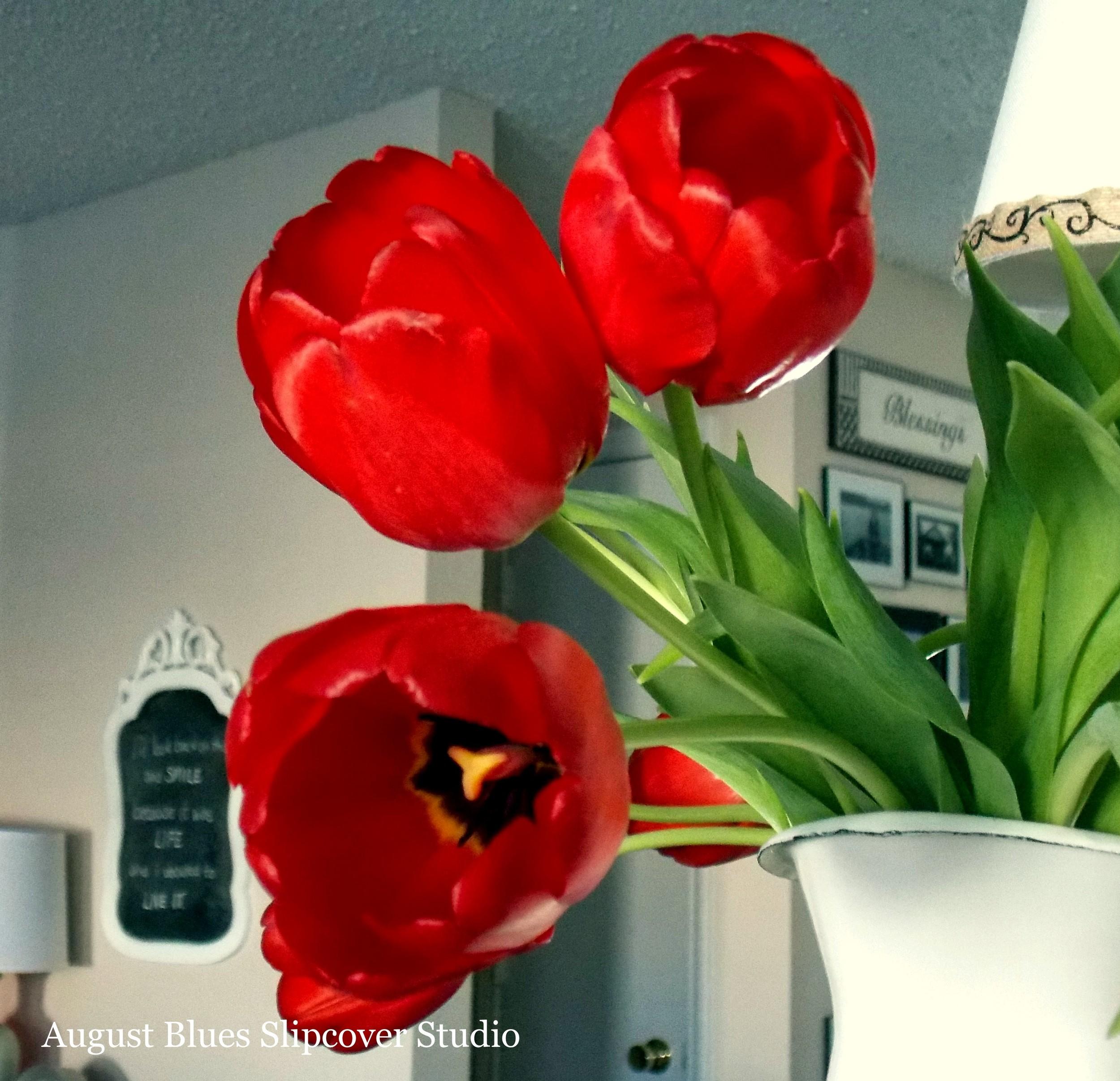 tulips-close-up.jpg
