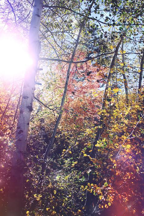 Beautiful Fall Scene | Spirit de la Lune