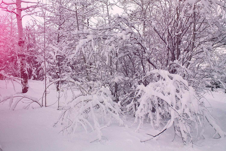 Snowy Forest | Spirit de la lune Cold Moon