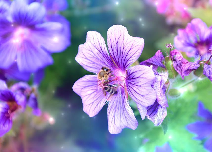 Honey Bee Animal Spirit Ceremony