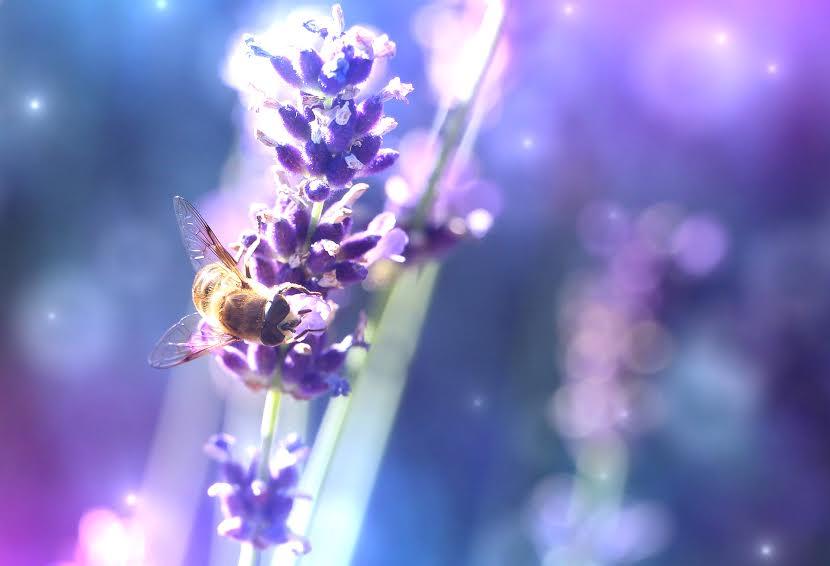 Honey Bee Spirit Ally   Spirit de la lune