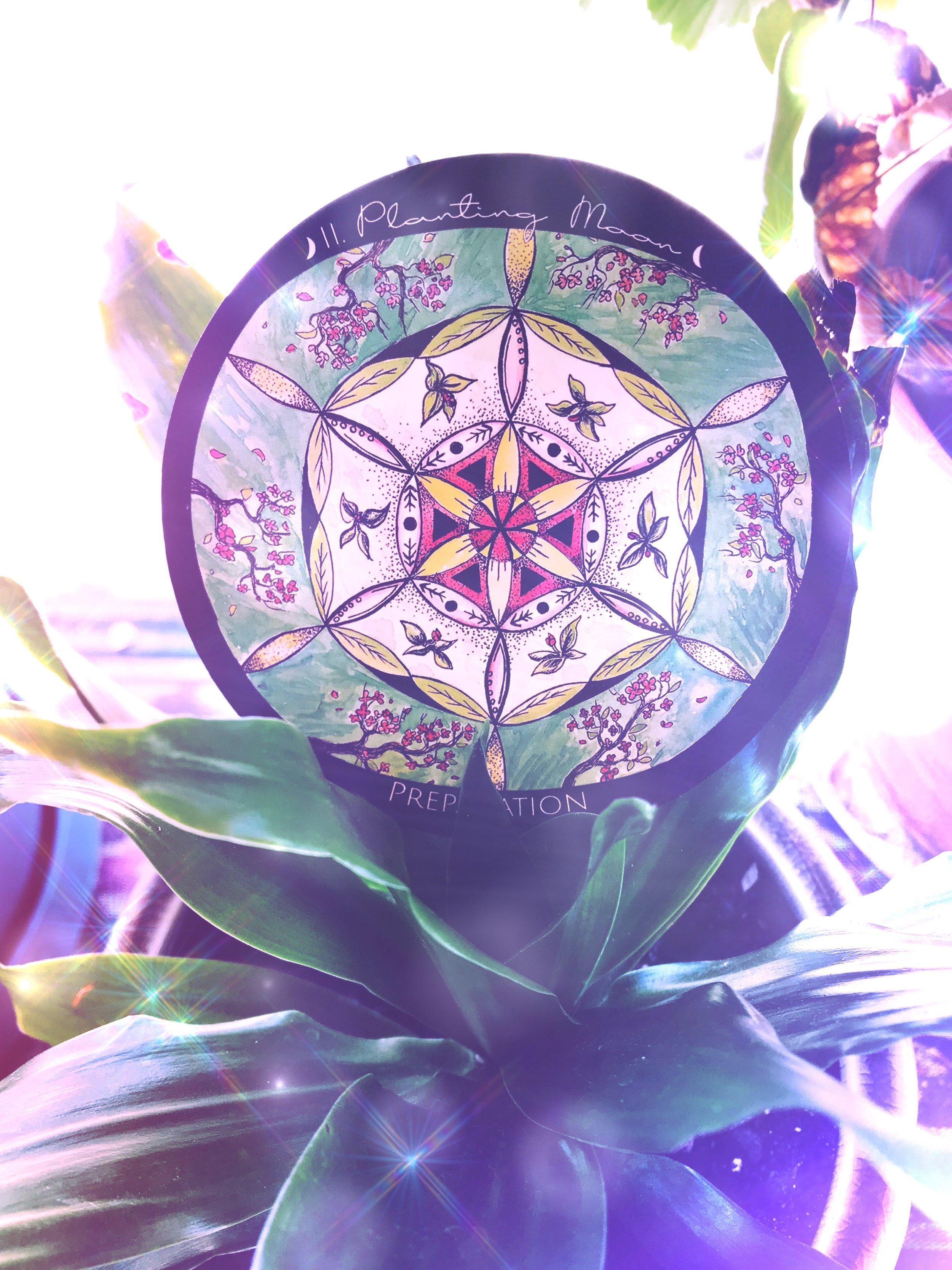 Intention Planting Ceremony | Spirit de la Lune