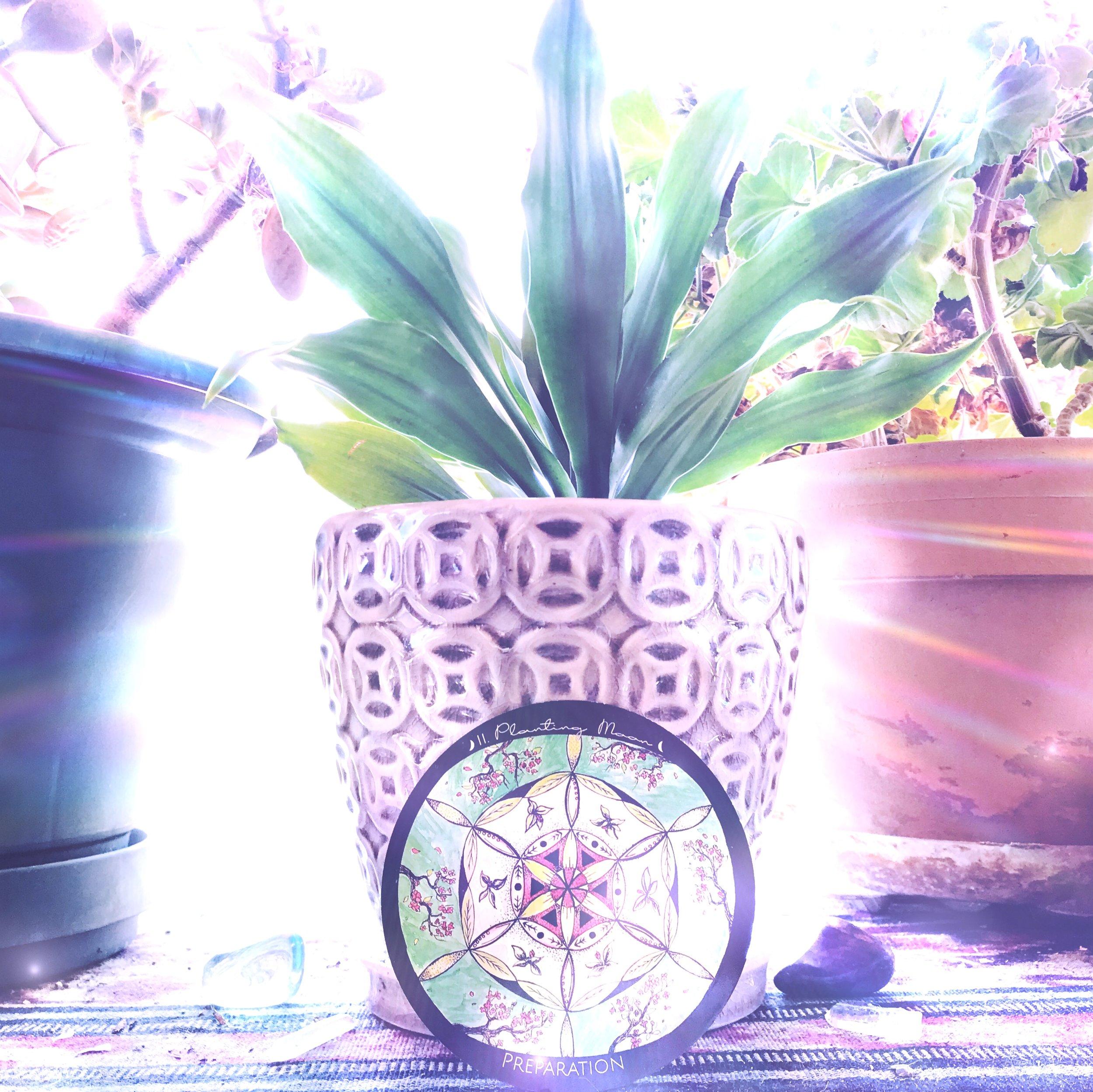 Planting Moon Ceremony | Spirit de la Lune