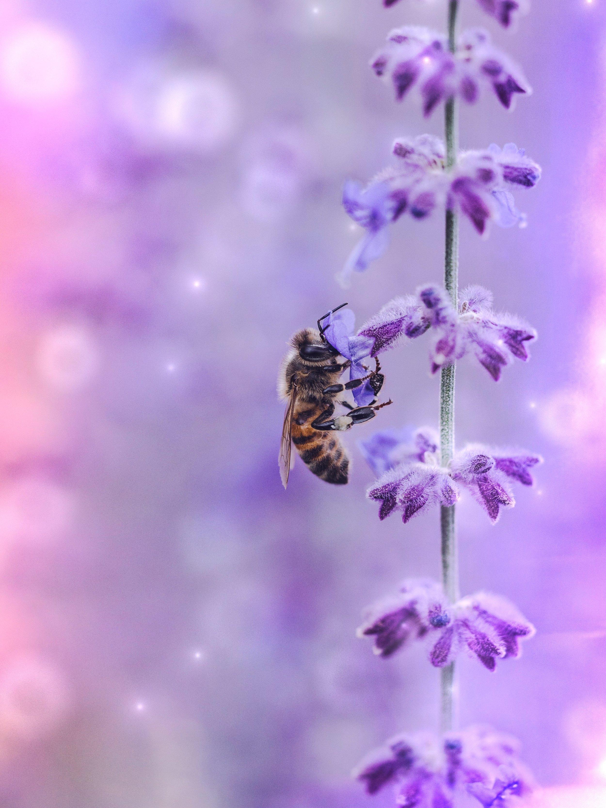 Full Honey Moon Bee | Spirit de la Lune