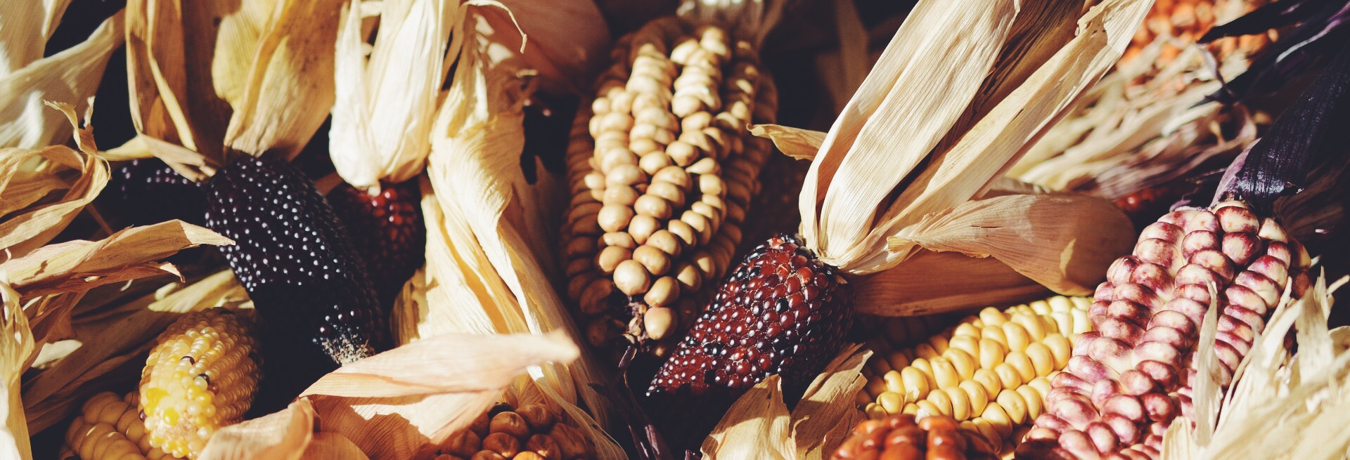Corn Moon Spirit de la lune | Full Moon Corn Husk Ritual