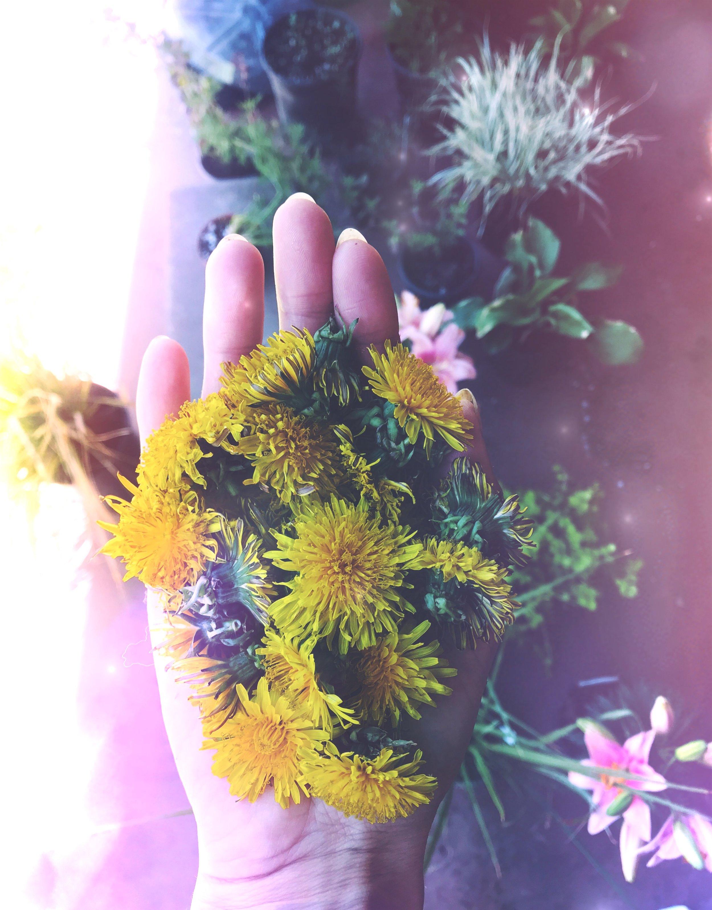 Dandelion Divination and Tea Leaf Reading    Full Honey Moon in Sagittarius