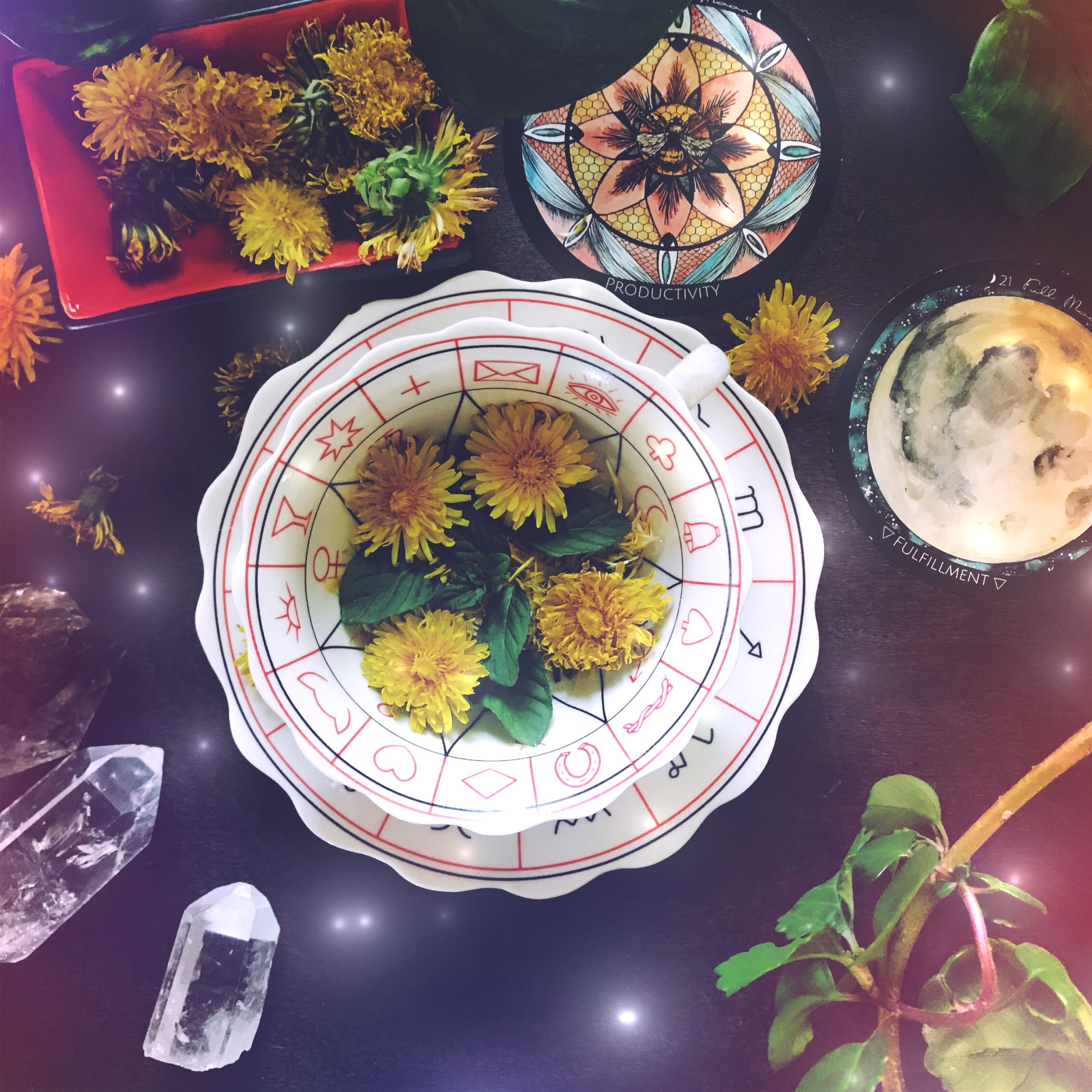 Dandelion Divination and Tea Leaf Reading  | Full Honey Moon in Sagittarius