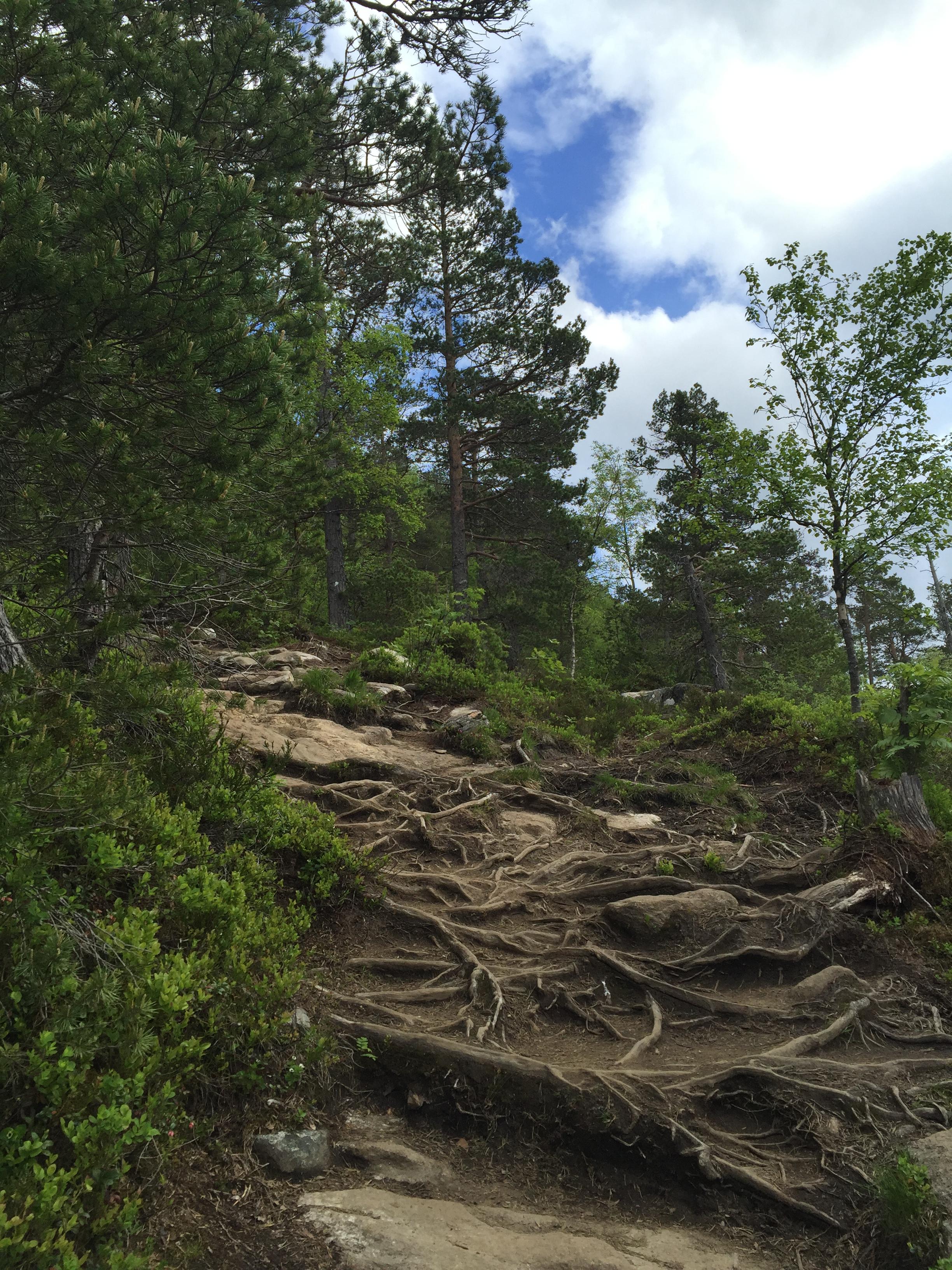 Hike to Rampestreken viewpoint.