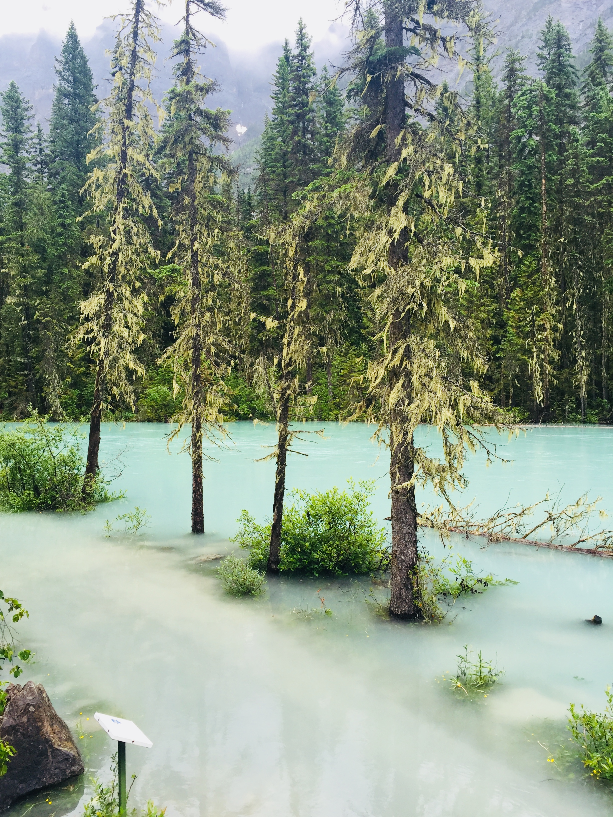 A flooded Kinney Lake Trail in Mt. Robson Provincial Park