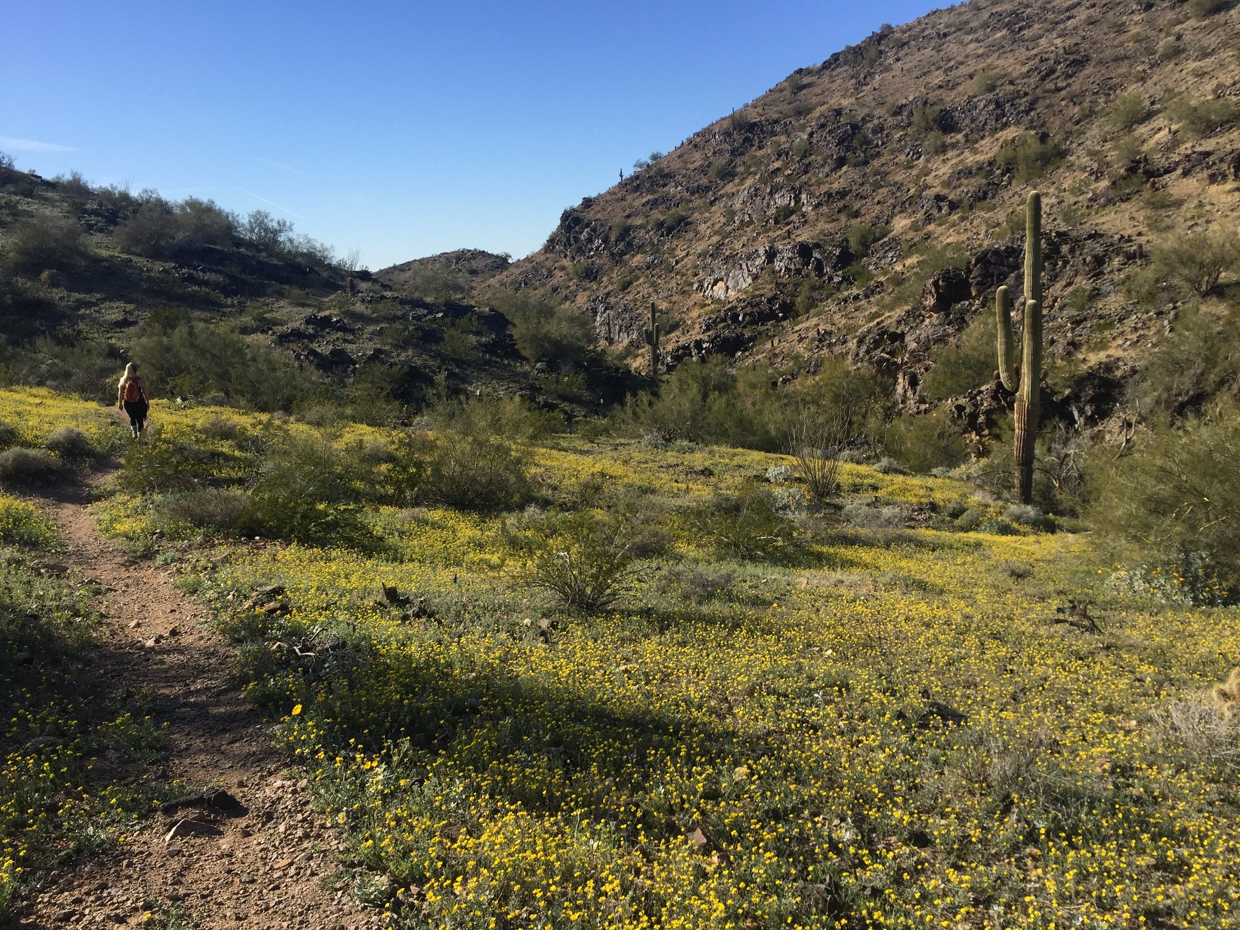 Phoenix February 2019 South Mountain 2.JPG