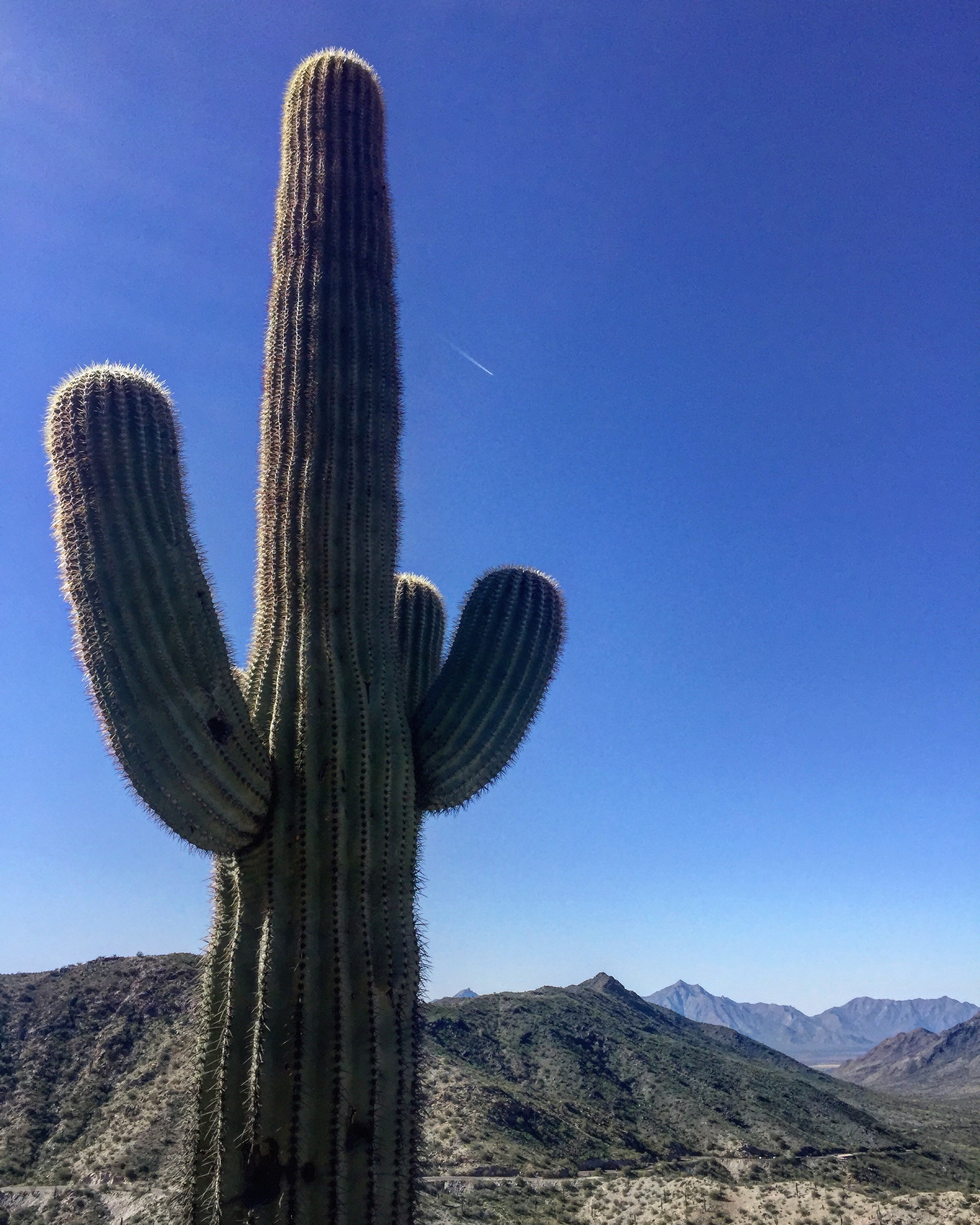Phoenix February 2019 South Mountain 3.JPG