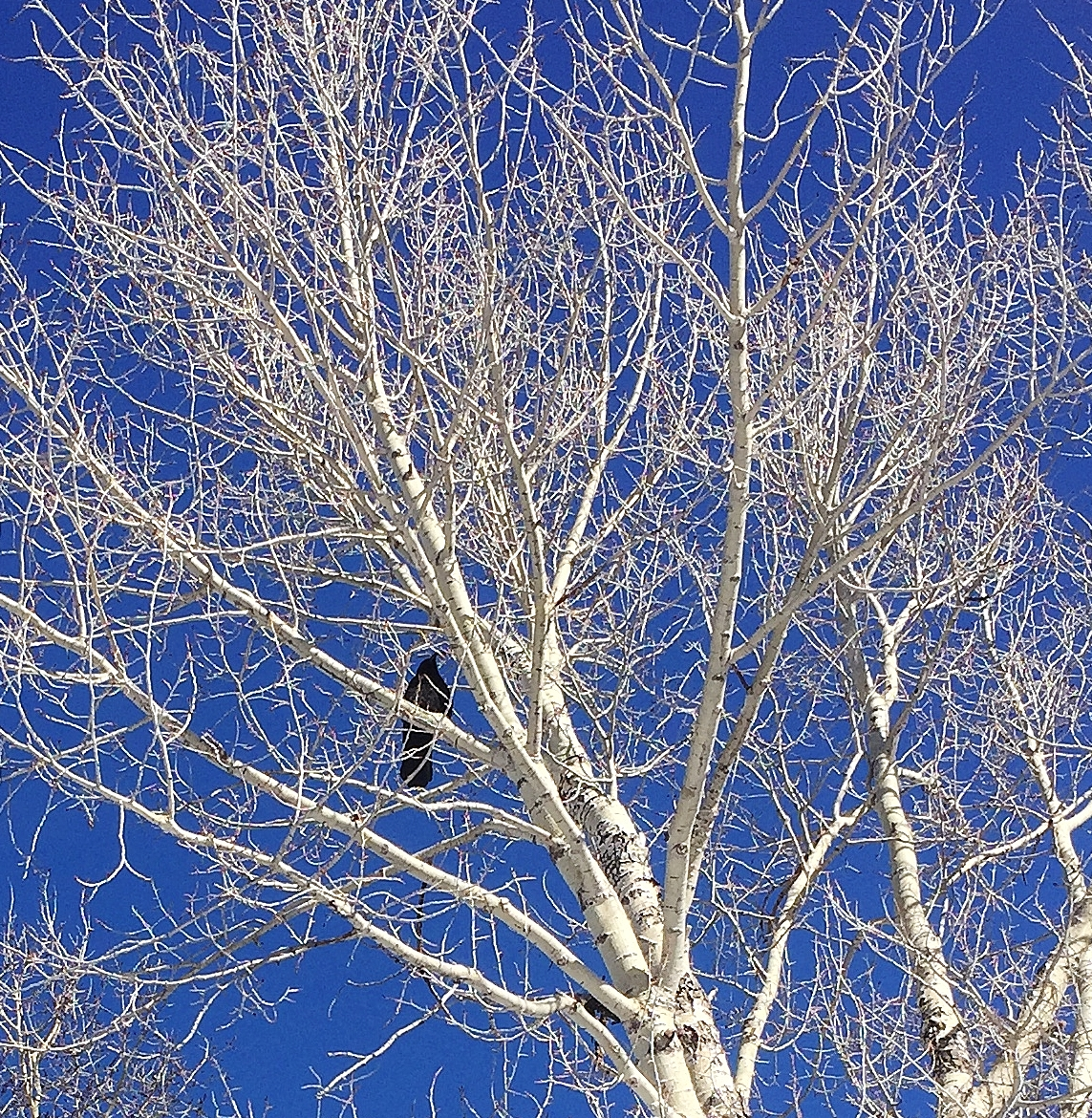A raven watches us as we work.