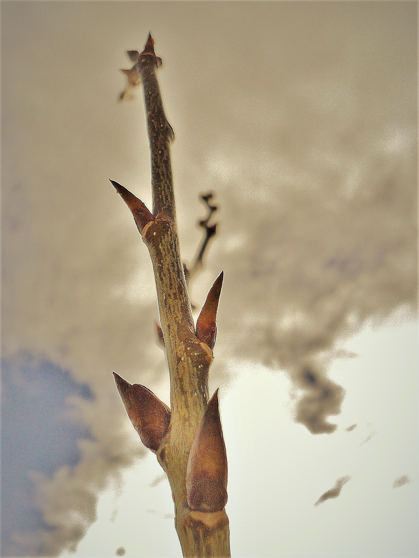 Reaching for sky!