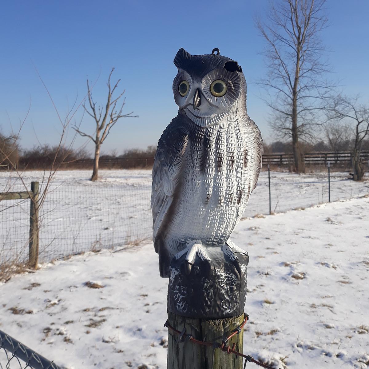 Orchard_House_Boutique-hotel-owl-hawk-farm.jpg
