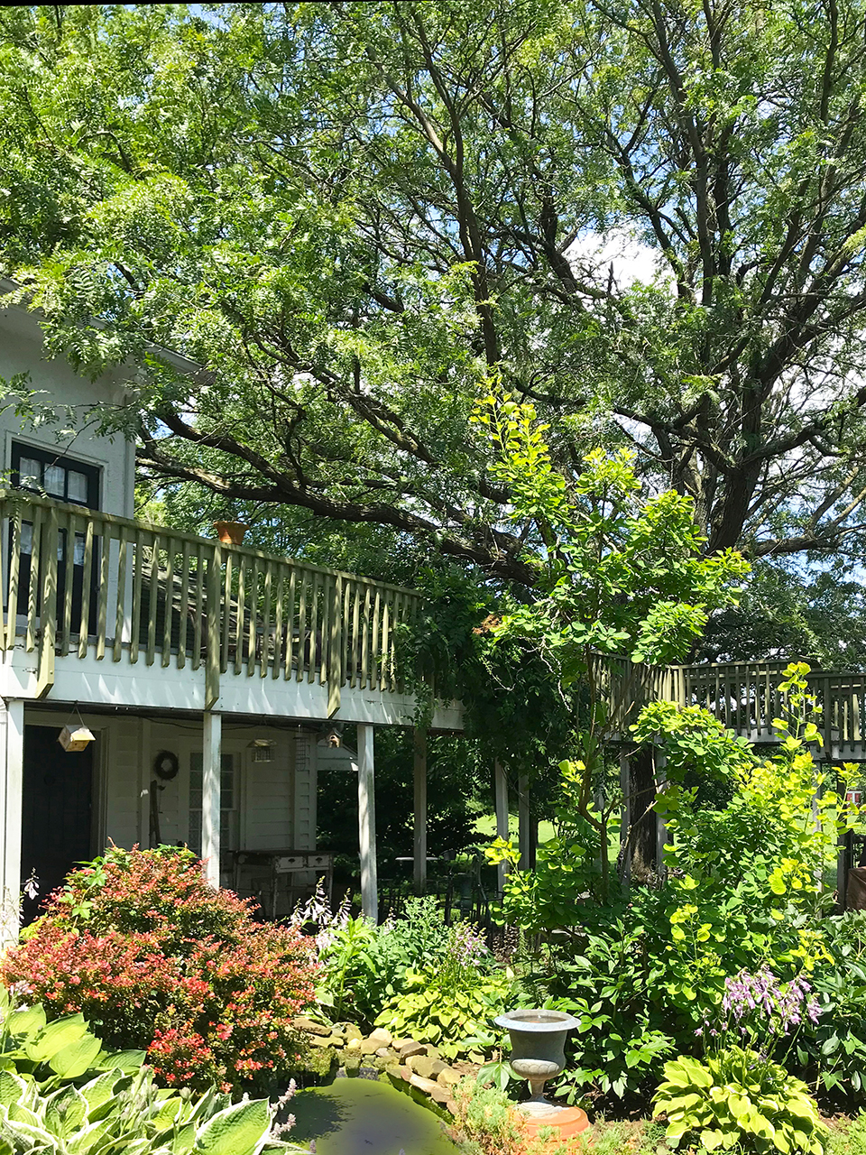 Orchard-house-columbus-hotel-courtyard-huge-tree-private-patio.jpg