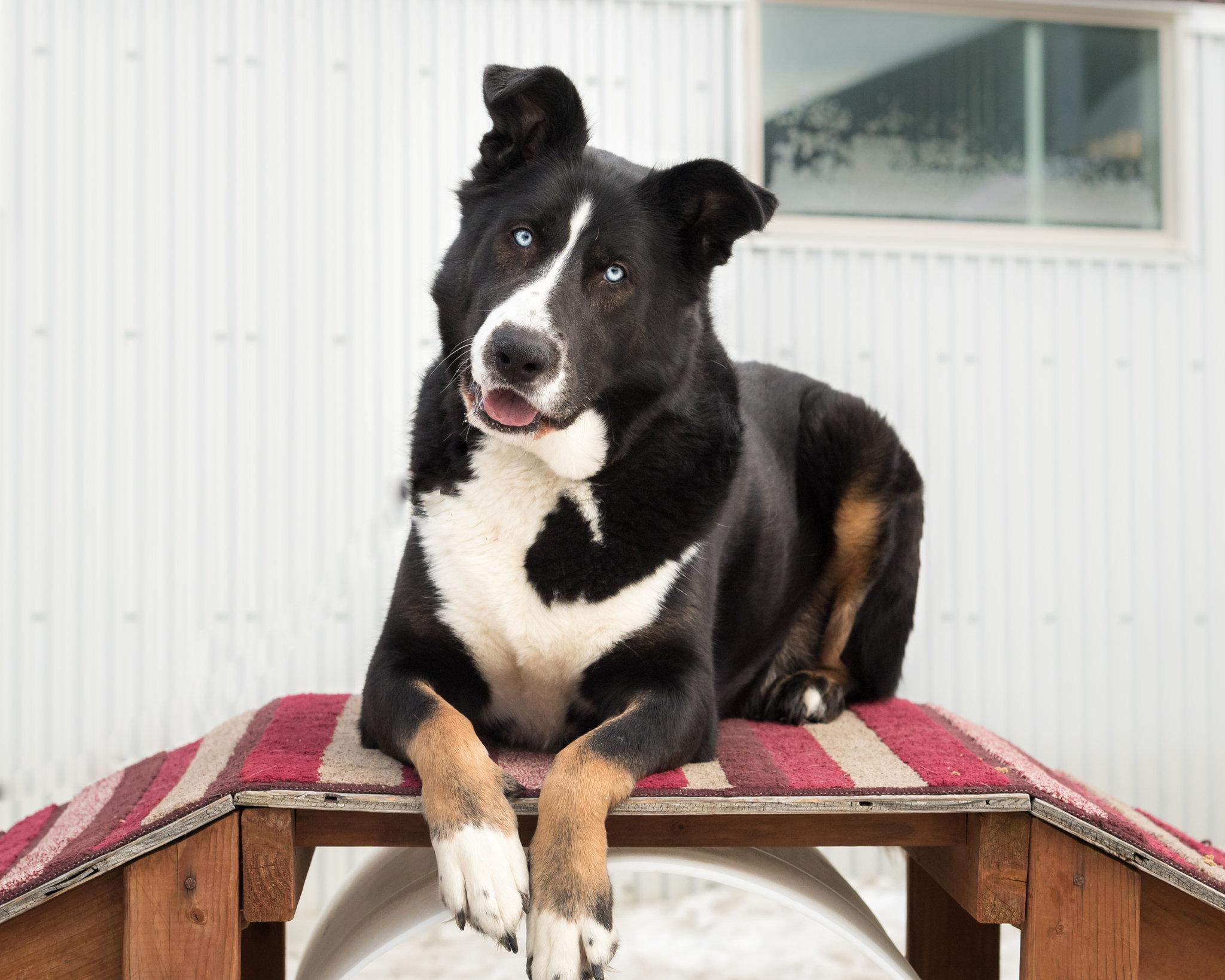 PETS & ANIMALS - Adopt Tucker - Copy.jpg