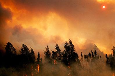COMMUNITY - Fire Fears (1) WEB.jpg