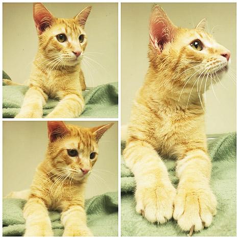 PETS & ANIMALS - Leonitus WEB.jpg