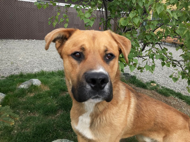 PETS & ANIMALS - Emma, Kinley, Roo and Goliath Are Needing Homes!(Goliath).jpg