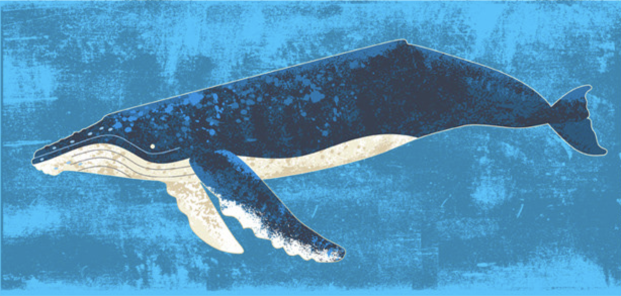 whale1.png
