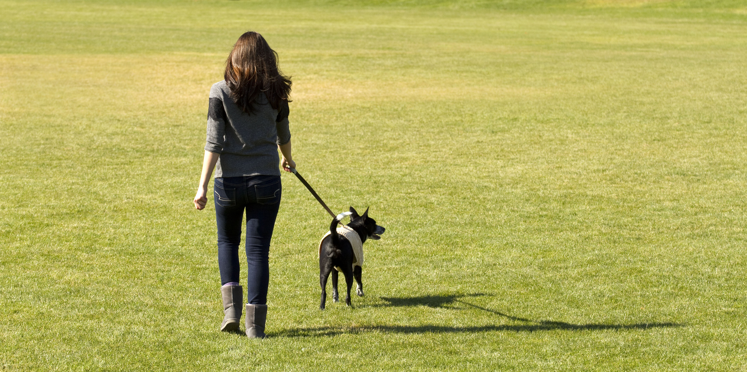Basic Obedience - In this 5 week long class, we work with you to teach your dog the basic commands as well as eliminating negative puppy behaviors. This class is 5 weeks long with a minimum age requirement of 3.5 months old. All breeds are welcome!