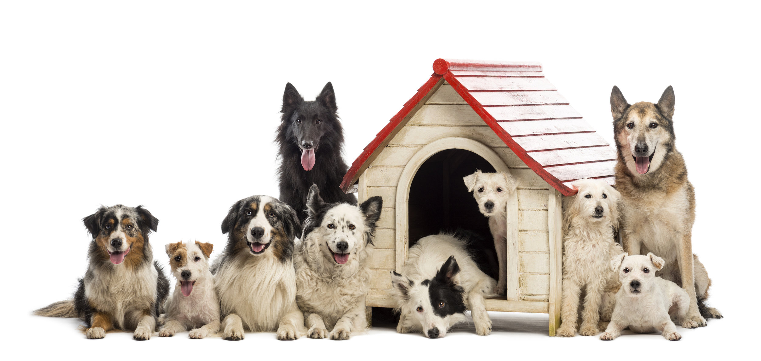 Advanced Obedience Class - If your dog has a good understanding of the basic commands and you are looking to elevate the training to the next level, this class is for you! Advanced Obedience Class will cover topics including tune ups, off leash work, heavy distraction work, agility work, and more! All ages and breeds are welcome!