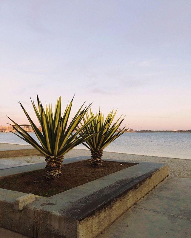 Bay scenes++⠀⠀⠀⠀⠀⠀⠀⠀⠀ ⠀⠀⠀⠀⠀⠀⠀⠀⠀ ⠀⠀⠀⠀⠀⠀⠀⠀⠀ #visitsandiego #sandiegotravel #travelandleisure #lifestyle #scenesoflife