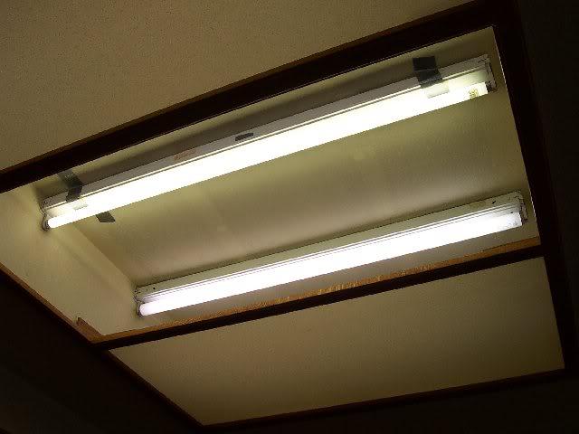 fluorescentlights.jpg