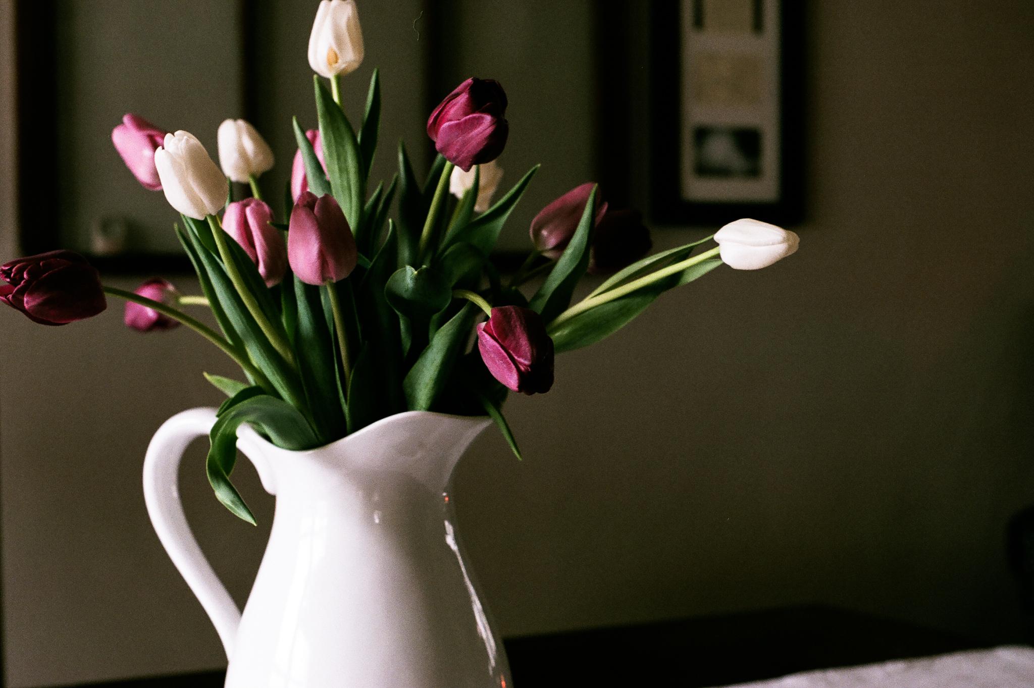 tulips. Idaho Avenue Studios. natural light. film. fuji 400.