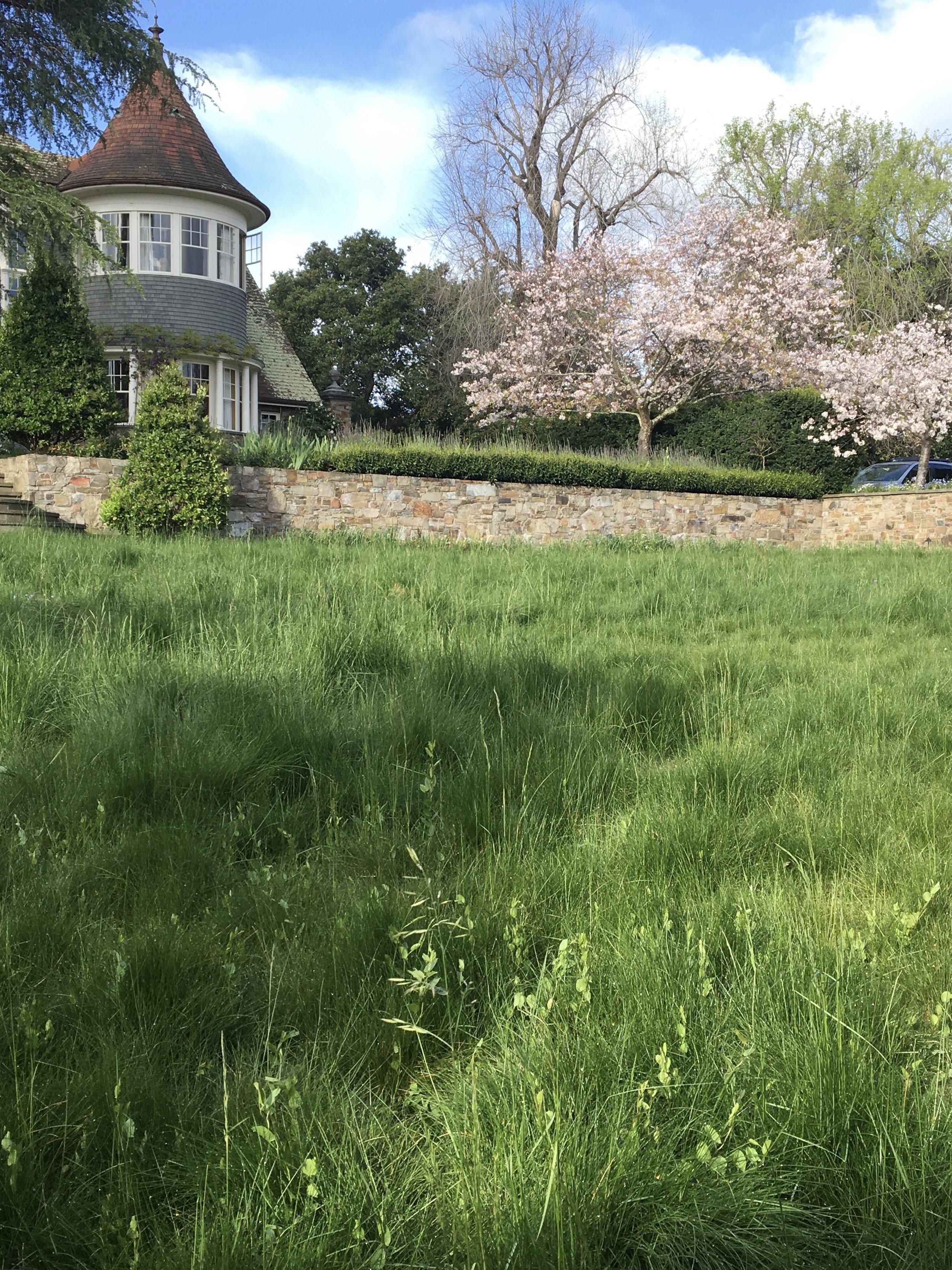 Diana Meadow Grass.jpeg