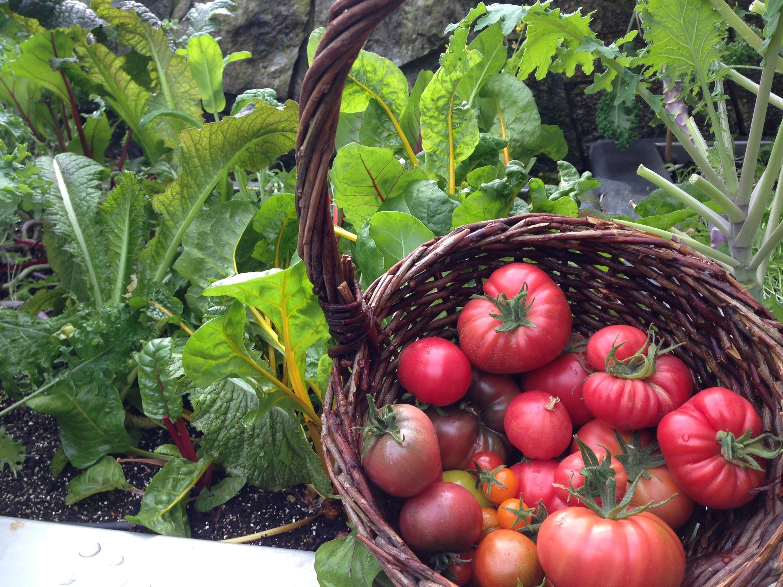 tomatobasket1.jpg