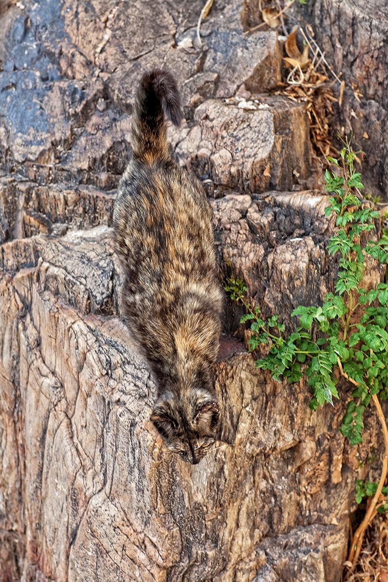 Cat Rock (1 of 1)a.jpg