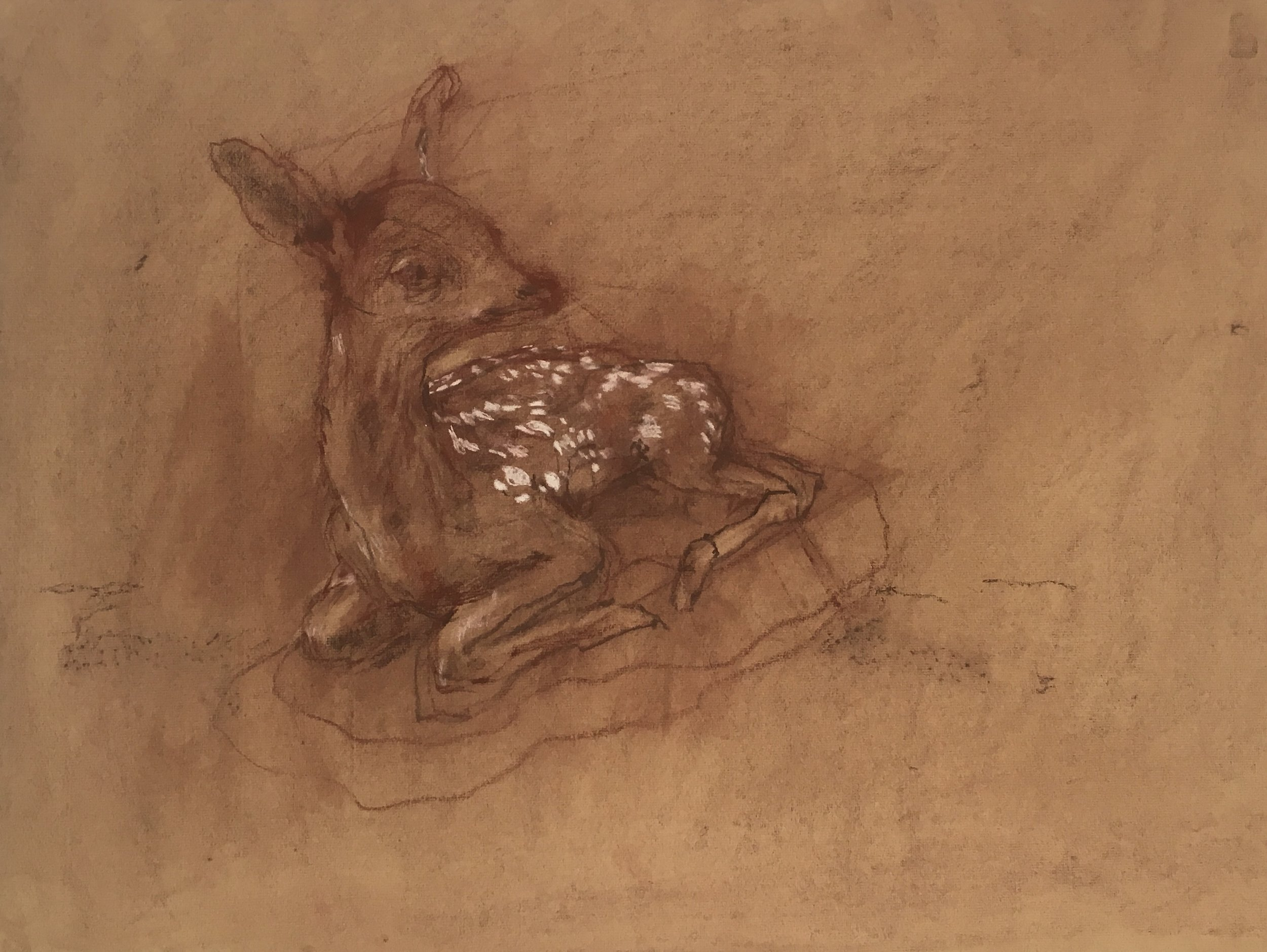 Baby Deer Taxidermy (1 of 6)  Conte crayon on brown pastel paper 22 x 19 inches 2019