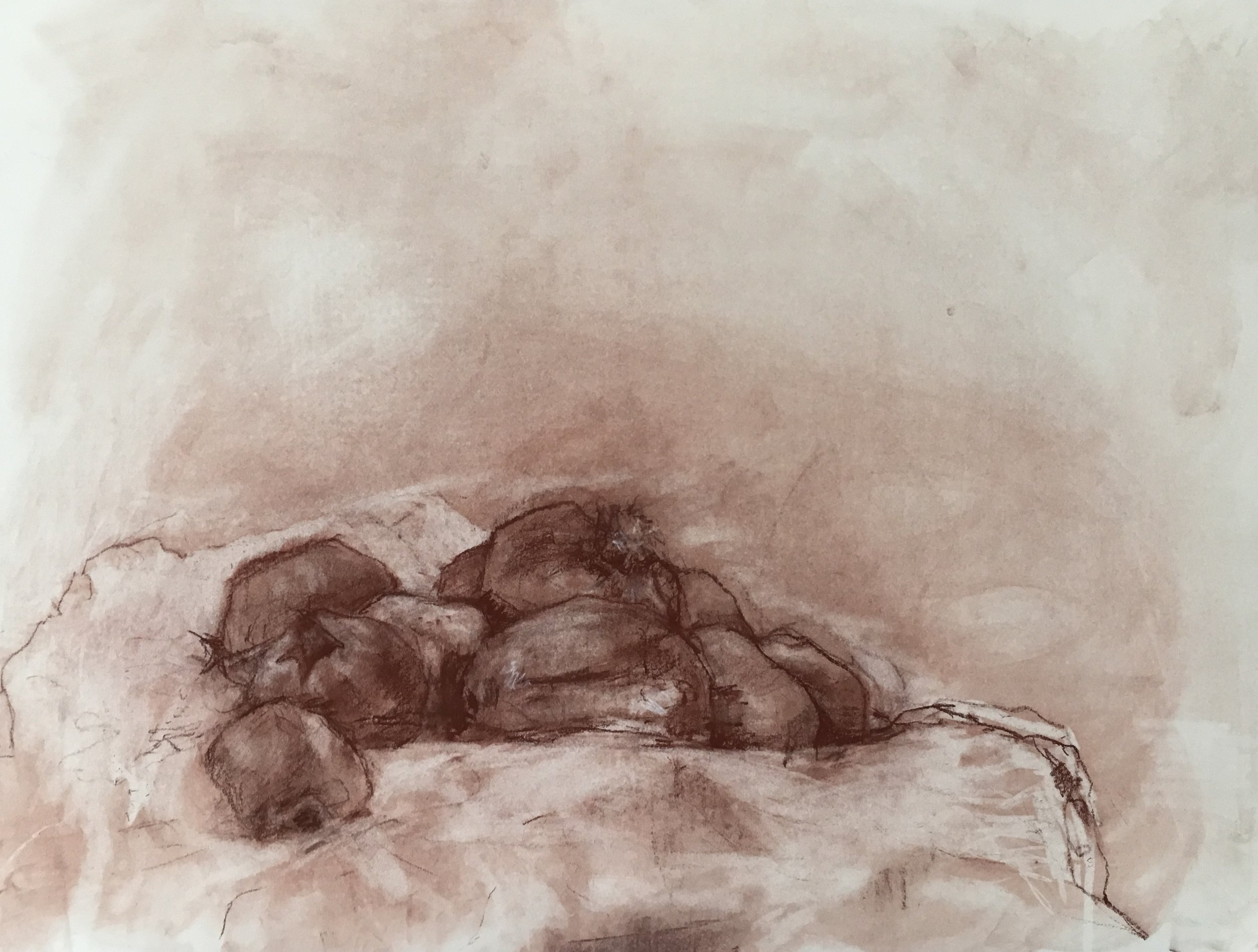 Pomegranates  conte crayon on cream drawing paper 24 x 18 inches 2019