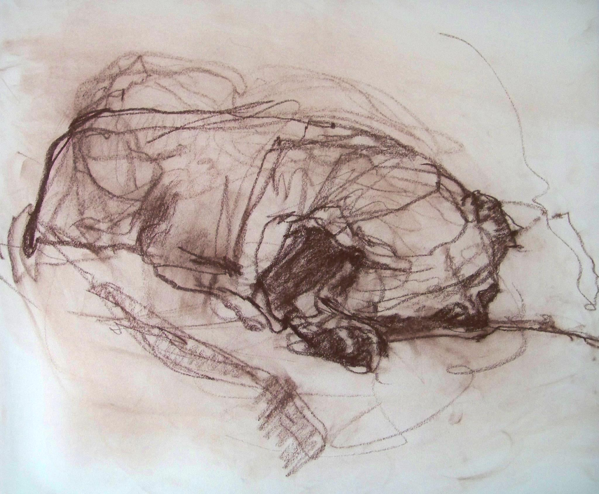 Sir Winston Justice of West Dry Creek, sleeping  Conte crayon on cream drawing paper 2016