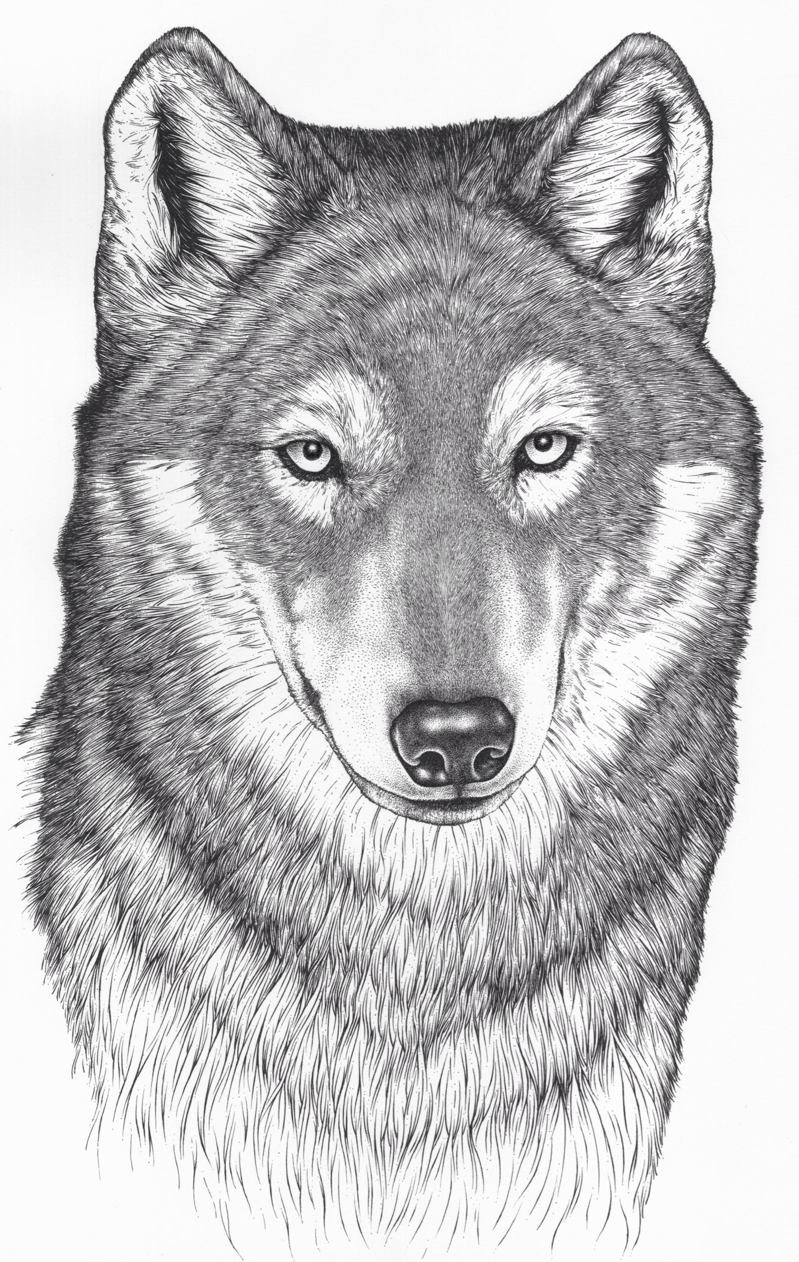 Wolfski.jpeg