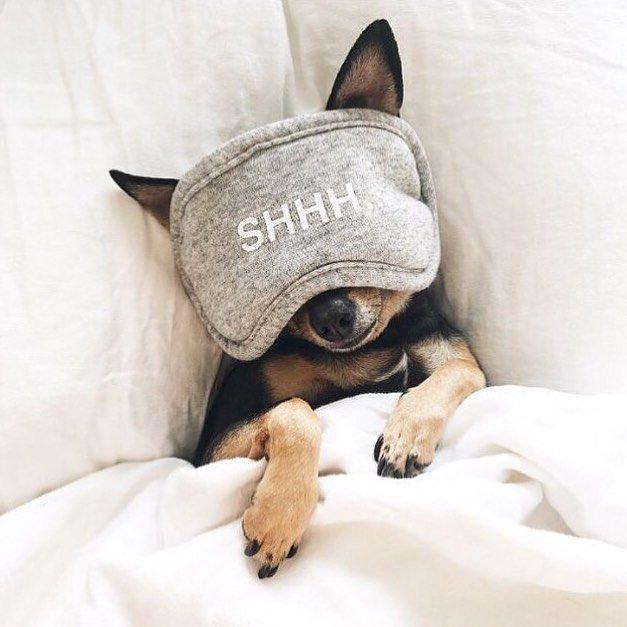 sleep pup.jpg