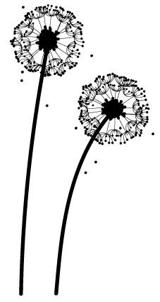 dandelionWeb.jpg