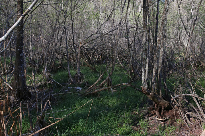 MarshallSwamp11.jpg