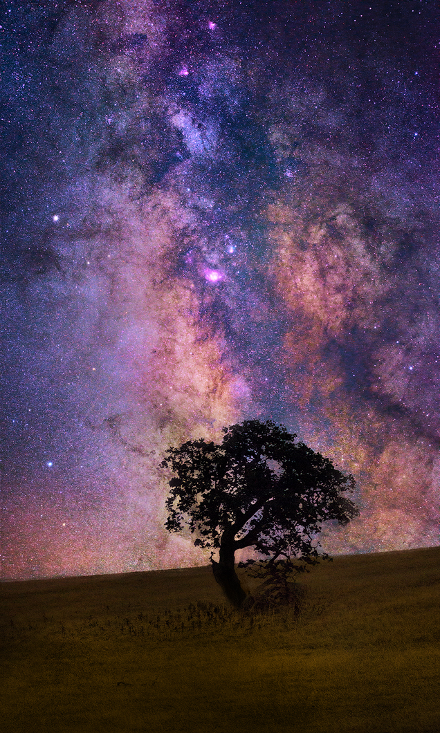 Lone Tree Milky Way