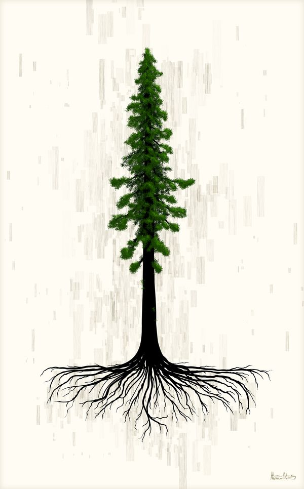 redwood roots.jpg