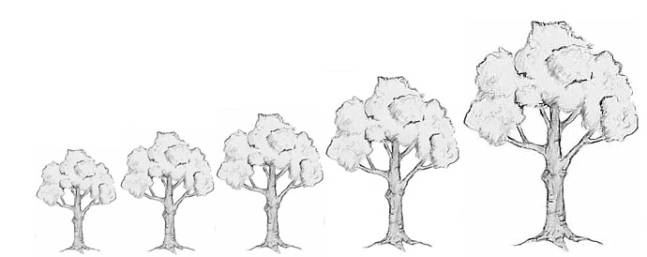 tree size.jpg
