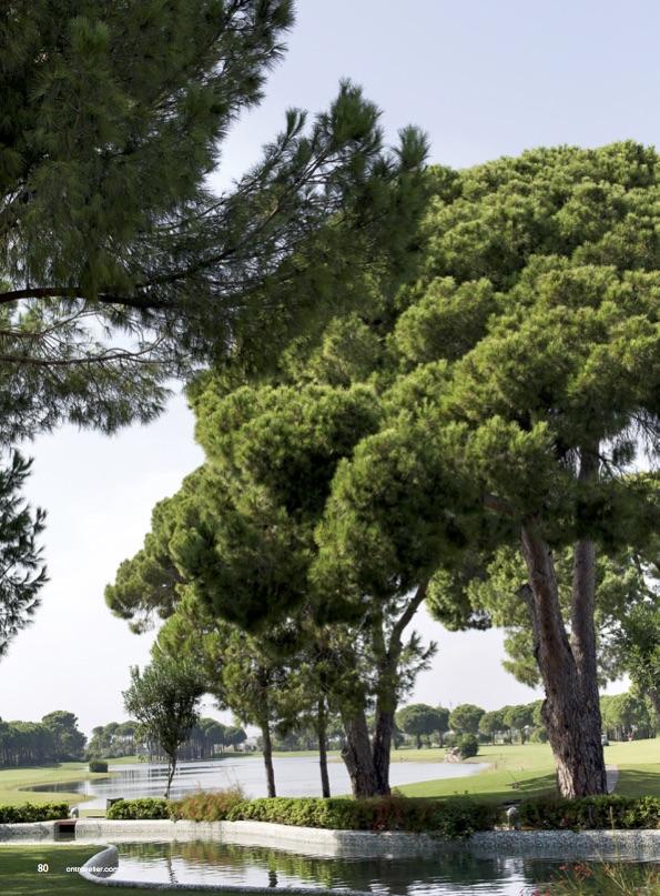 cnt_golf_page_5.jpg