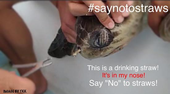 Turtle-Straw-Nose.jpg