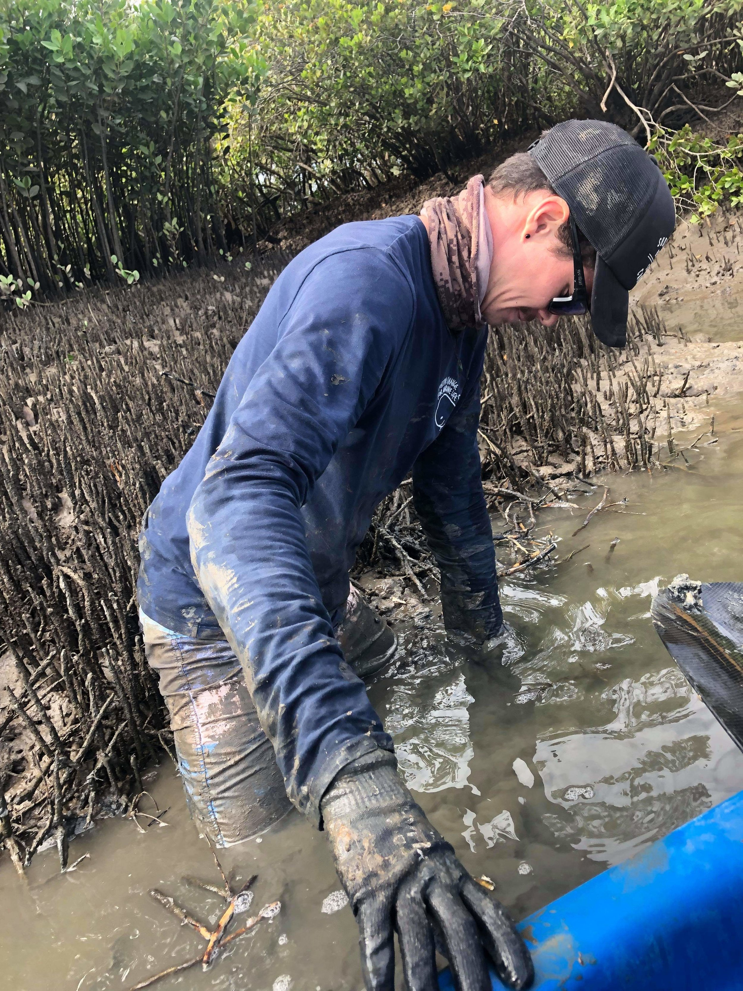 Our River Warriors Redlands Coordinator Kyle Debets, getting his hands dirty to retrieve debris from the mangroves in Tingalpa Creek.