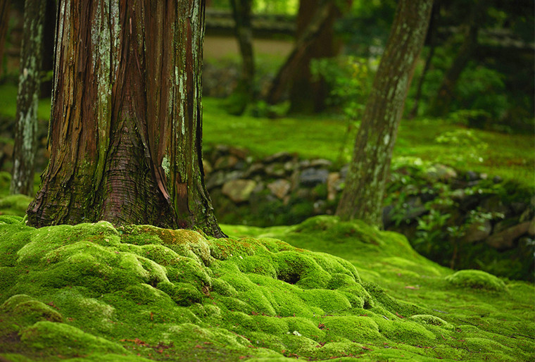Moss Temple woods landscape.jpg