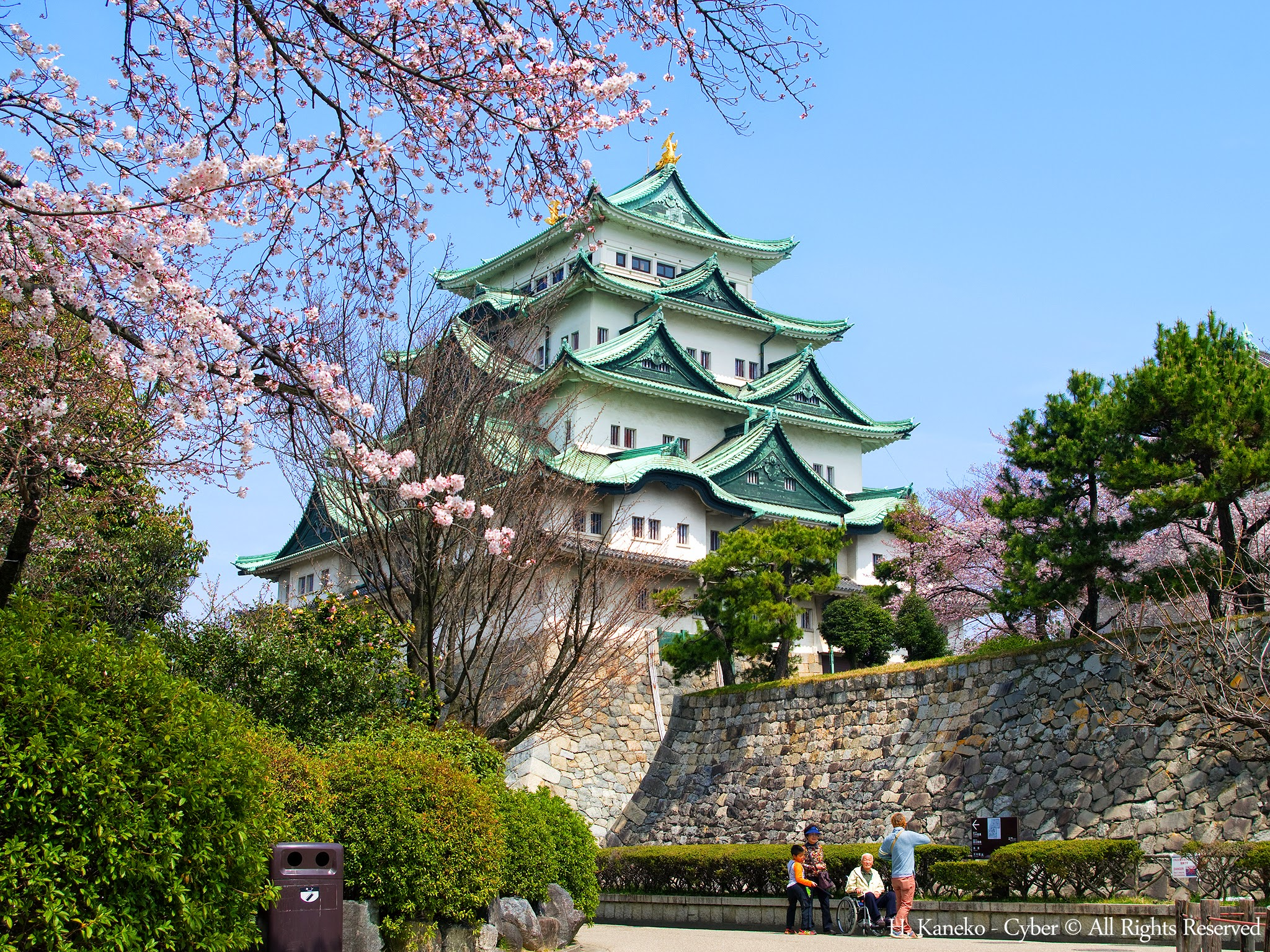 桜と名古屋城(Nagoya_Castle_with_Cherry_blossoms)_31_Mar,_2016_-_panoramio.jpg