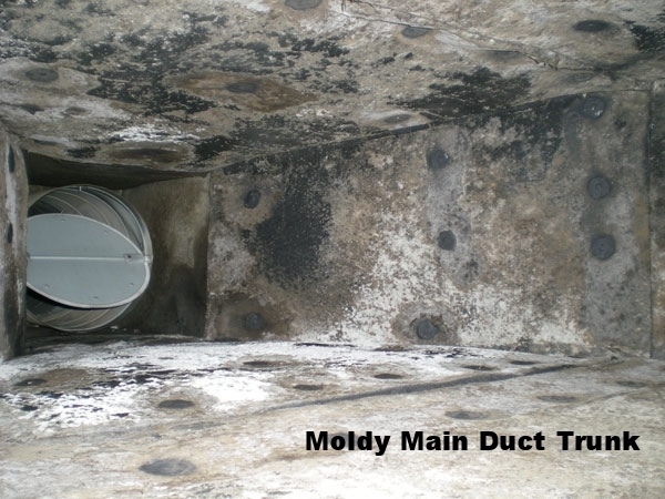 Mold-Amplification-Duct.jpg